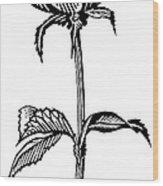Rose, Lino Print Wood Print by Gary Hincks