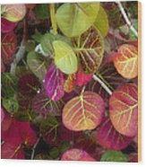 Sea Grape Wood Print by Joseph G Holland