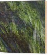 Sea Weed Wood Print by Michael Mogensen
