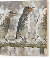Sing Sing Sing Wood Print by Amy Tyler