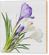Spring Crocus Flowers Wood Print by Elena Elisseeva
