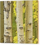 Three Autumn Aspens Wood Print by James BO  Insogna