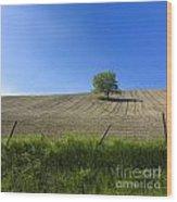 Tree  Wood Print by Bernard Jaubert