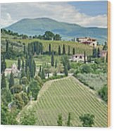 Vineyards On A Hillside Wood Print by Rob Tilley