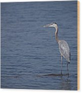 1206-9280 Great Blue Heron 1 Wood Print by Randy Forrester