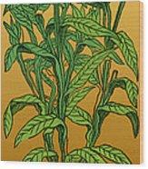 Centaurea Montana, Bachelors Button Wood Print by Science Source