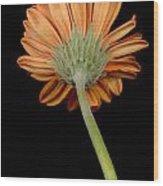 Orange Gerber Wood Print by Al Hurley
