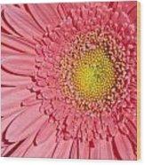 Pink Gerber Wood Print by Al Hurley