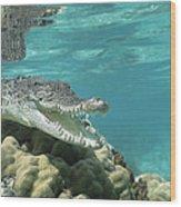 Saltwater Crocodile Crocodylus Porosus Wood Print by Mike Parry