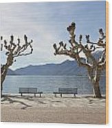 sycamore trees in Ascona - Ticino Wood Print by Joana Kruse