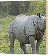 Indian Rhinoceros Wood Print by Tony Camacho