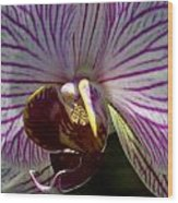 Orchid Flower Wood Print by C Ribet