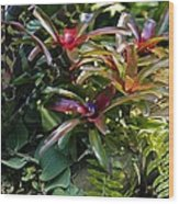 Bromeliad Plant Wood Print by Dr Keith Wheeler