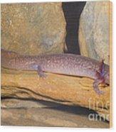 Spring Salamander Wood Print by Dante Fenolio