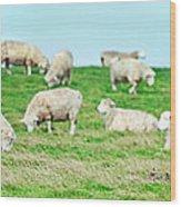 Sheeps Wood Print by MotHaiBaPhoto Prints