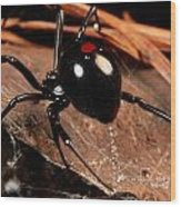 A Black Widow Spider Latrodectus Wood Print by George Grall