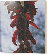 A Bunch Of Red Peppers Hung To Dry Wood Print by Stephen St. John