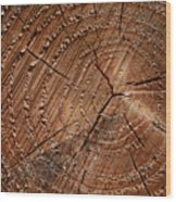 A Close Up Of Tree Rings Wood Print by Sabine Davis