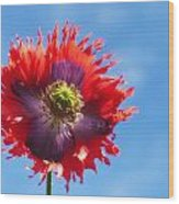 A Colorful Flower With Red And Purple Wood Print by John Short