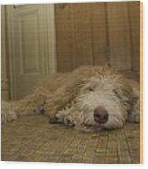 A Dog Lies On A Linoleum Floor Wood Print by Joel Sartore