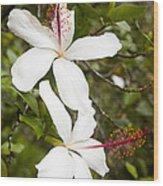 A Native Hawaiian Hibiscus Arnottianus Wood Print by Taylor S. Kennedy