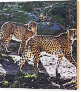 A Pair Of Cheetah's Wood Print by Bill Cannon
