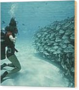 A School Of Grunts Swims By A Diver Wood Print by Nick Caloyianis