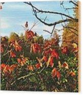 A Splash Of Red II Wood Print by Julie Dant
