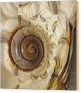 Abstract Seashell Wood Print by Shirley Sirois