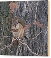 Acorn Connoisseur Wood Print by Daryl Macintyre