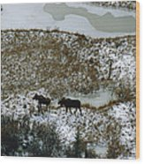 Aerial Of A Male And Female Moose Wood Print by Norbert Rosing
