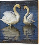 Alpha Swan Wood Print by Brian Stevens