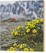 Alpine Meadow  Wood Print by Elena Elisseeva