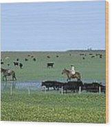 Argentine Gauchos, Or Cowboys, Herd Wood Print by James P. Blair