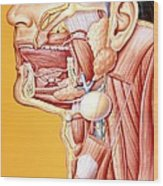 Artwork Of Mouth/neck: Tumour, Cyst, Duct Calculus Wood Print by John Bavosi