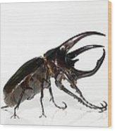 Atlas Beetle Wood Print by Chris Hellier
