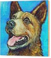 Australian Cattle Dog   Red Heeler  On Blue Wood Print by Dottie Dracos