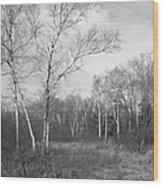 Autumn Birches Wood Print by Anna Villarreal Garbis
