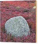 Autumn Blueberry Field Wood Print by John Greim