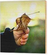 Autumn In Hand Wood Print by Kelly Hazel