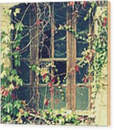 Autumn Vines Across A Window Wood Print by Georgia Fowler