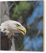 Bald Eagle At Mclane Center Wood Print by Peter Gray