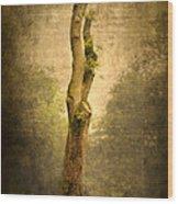 Bare Tree Wood Print by Svetlana Sewell