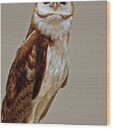 Barn Owl Of Michigan Wood Print by LeeAnn McLaneGoetz McLaneGoetzStudioLLCcom