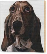 Basset Hound Named Coquette Wood Print by Thomas Weeks