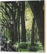 Benches Trees And Lamps Wood Print by Rob Hans