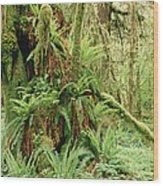 Bigleaf Maple Acer Macrophyllum Trees Wood Print by Gerry Ellis