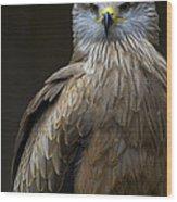 Black Kite 2 Wood Print by Heiko Koehrer-Wagner