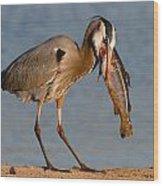 Blue Heron Vs. Rainbow Trout Wood Print by Paul Marto