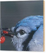 Blue Jay Wood Print by Photo Researchers, Inc.
